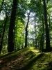bosco incantato_1