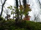 bosco incantato_4