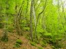 bosco incantato_5