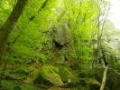 bosco incantato_6