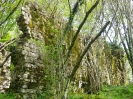 bosco incantato_8